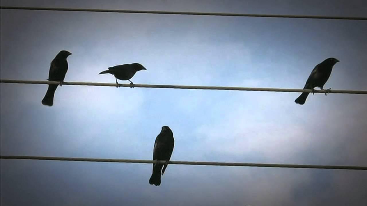 Opiniones de la tragaperra Birds on a Wire-392